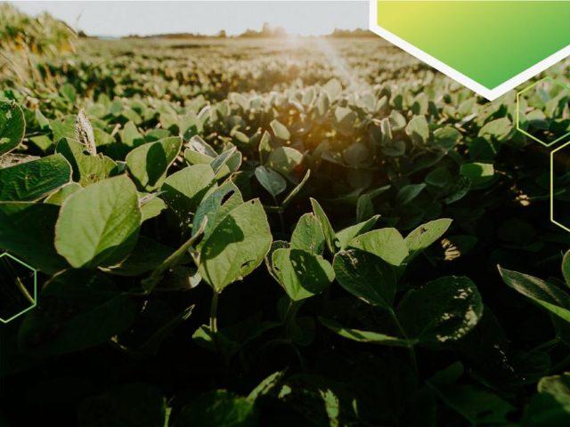 Curso de extensão sobre coberturas de solo e cultura da soja é oferecido pela UPF