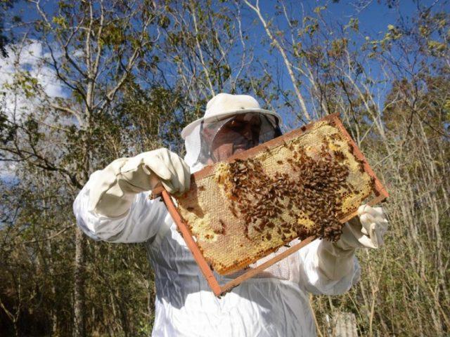 Inseticida fipronil é encontrado em 77% de amostras de colmeias com mortandade de abelhas no RS